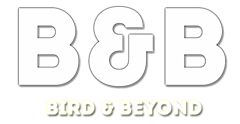 Birds Watching | Bird Feeding Live | Bird and Beyond
