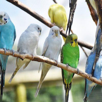 bird breeder texas