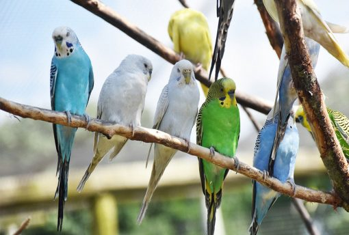bird breeder texas