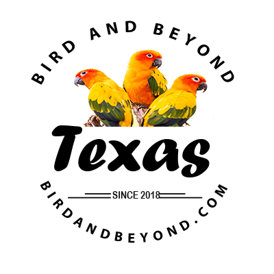 Birds for Sale in Texas | Bird Breeder Near me | Bird & Beyond