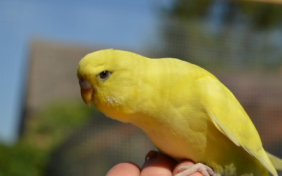 11 Things Only Bird Owners Understand