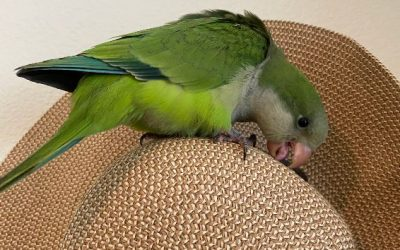 Pet Bird Price List and Caring for a Pet Bird