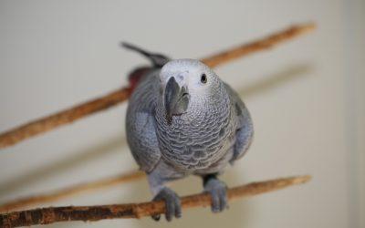 How To Teach Your Bird To Speak