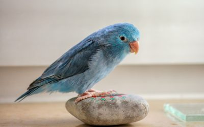 5 Signs That Your Bird Is Depressed