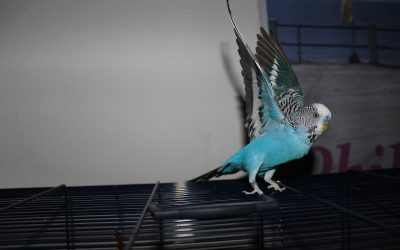 How To Train Your Bird To Dance