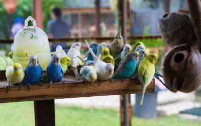 3 Best Pet Birds for Kids