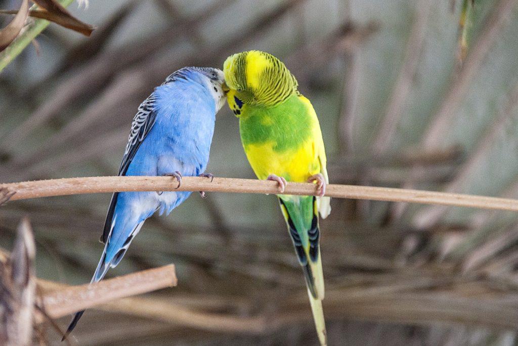 talk bird