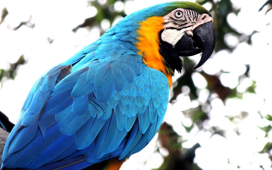 8 Best Friendly Pet Bird Species
