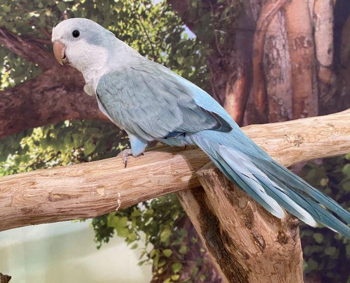 Bird's Life span