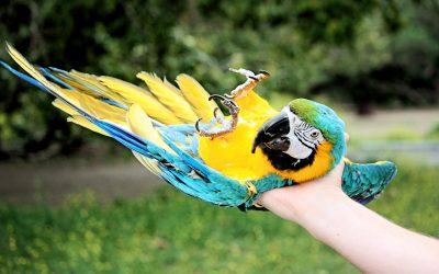 Cool Tricks You Can Teach Your Pet Bird