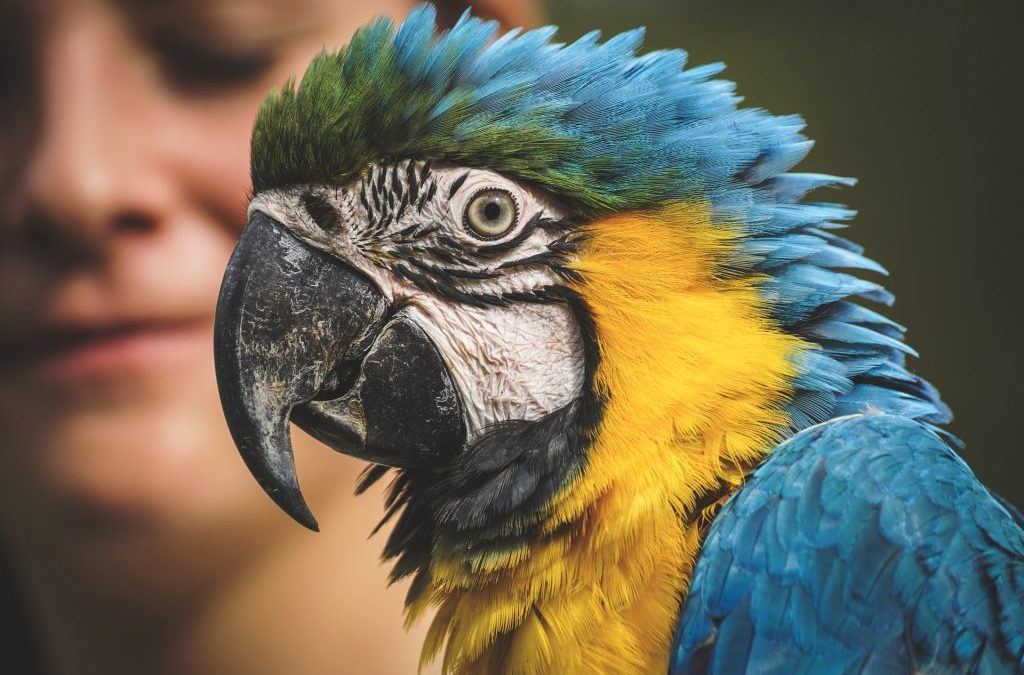 Do Parrots Make Good Pets For Kids