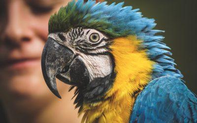 Do Parrots Make Good Pets For Kids
