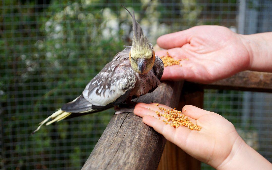7 Top Pet Bird Species for Senior Owners