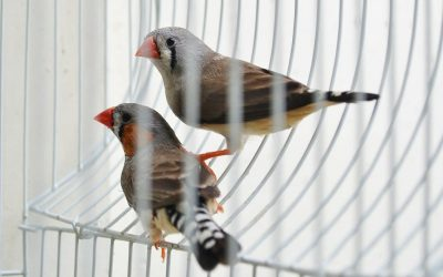 What To Do If Your Bird Flies Away