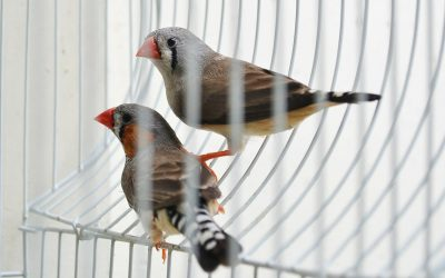 Ways to Find Your Bird a New Home
