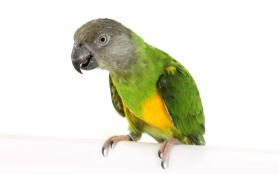 Words And Phrases To Teach Your Parrot