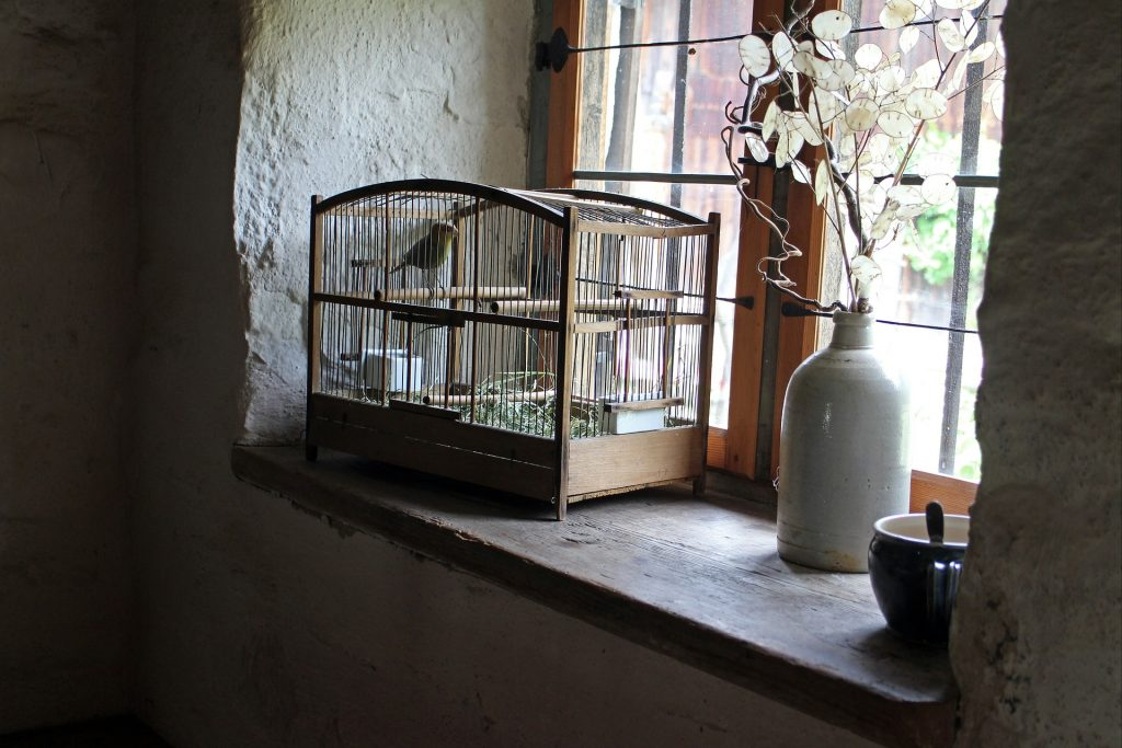 Tips To Clean Your Bird's cage