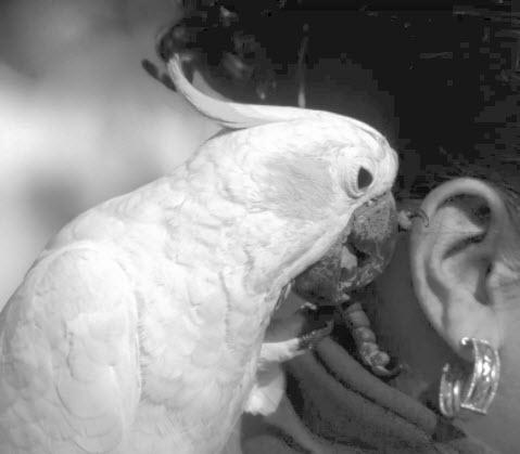 Safety Tips for Handling pet birds