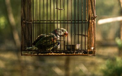 Bird Cage Sizes and Bar Spacing