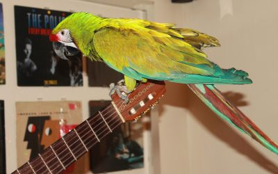 How to stay healthy around pet birds