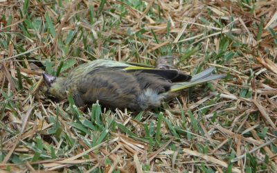 How to deal with the loss of a pet bird