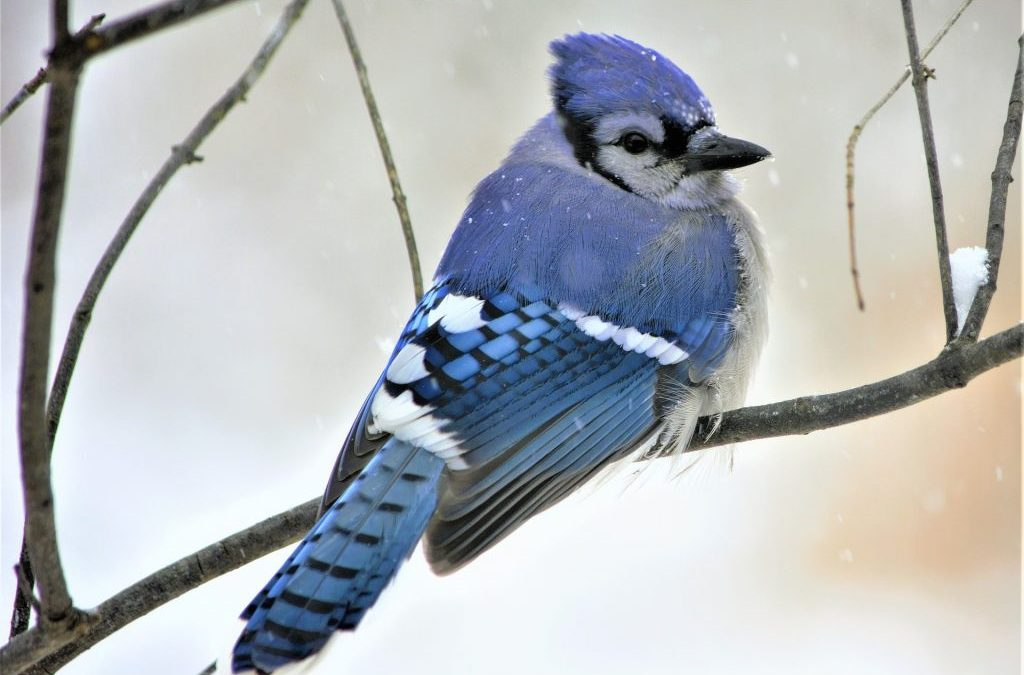 How to Care for Pet Birds in Cold Weather